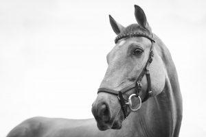 Skal du ud og købe ny hest?